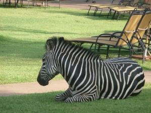 Zambia 2010 006